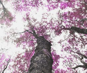 clouds, trees, and flowers image