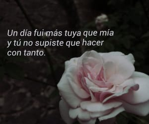 frases, quotes, and rose image