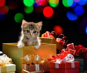 christmas, baby animals, and cats image