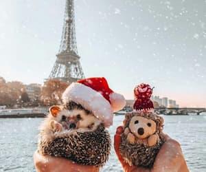 animal, christmas, and paris image