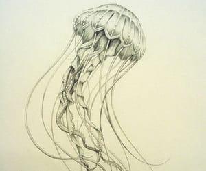 jellyfish, illustration, and art image