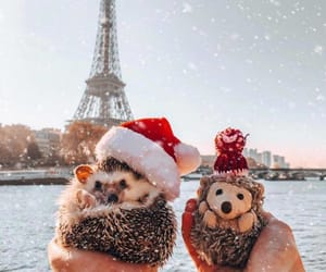 animal, christmas, and paris image