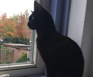 black, cat, and chilling image