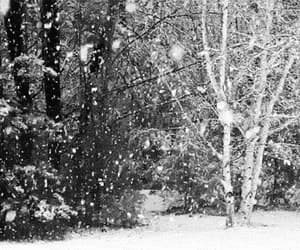 back and white, photography, and snow fall image