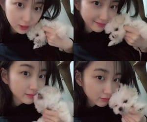 dog, cute, and lee yukyung image