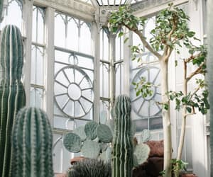article, wellness, and indoor plants image
