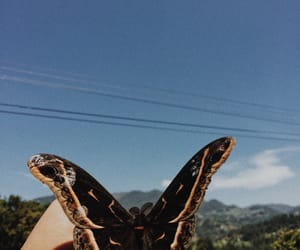 aesthetic, artsy, and butterfly image