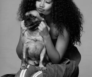 black and white, dog, and Queen image
