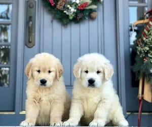 aww, christmas, and decoration image