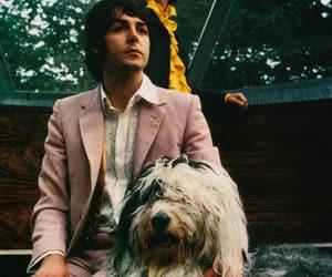 Paul McCartney, ringo starr, and the beatles image
