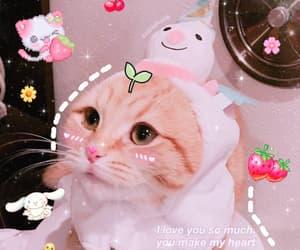 love meme, uwü, and cat love meme image