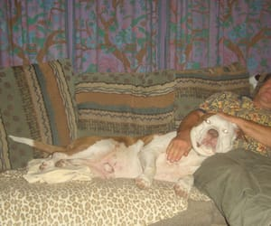 pit bulls, fight for animal rights, and pit bulls are love image