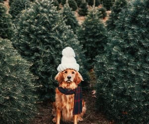 dog, animals, and christmas image