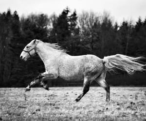 fast, forest, and gallop image