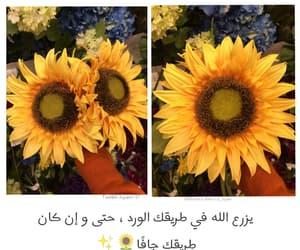 arabic, sunflower, and الله image