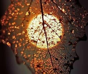 leaf, moon, and light image
