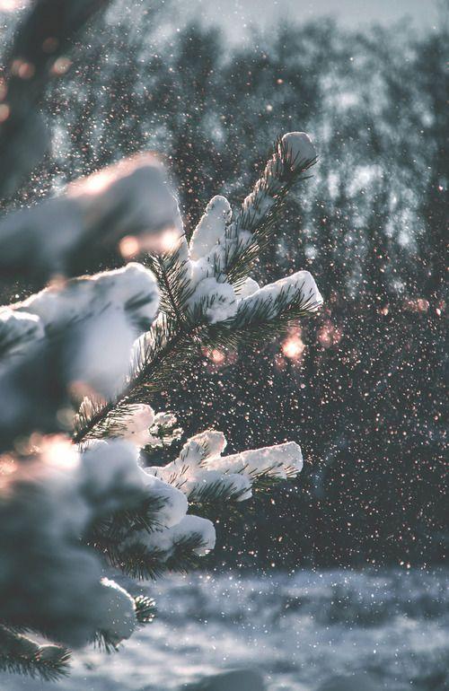 Winter Wallpaper Uploaded By Alexandralupan On We Heart It