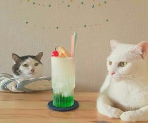 animal, cat, and cherry image