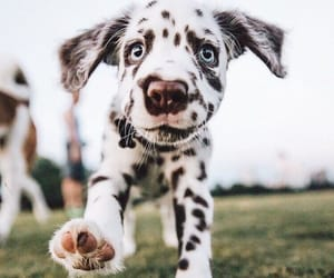 animal, dog, and puppy image