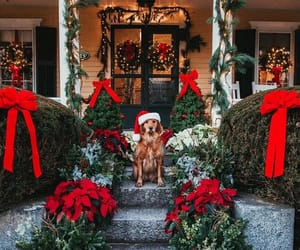 christmas, holiday, and dog image