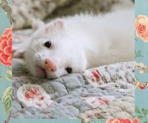 adorable, ferret, and ferrets image