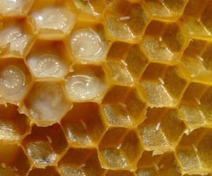 theme, rp, and honey image
