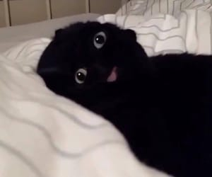 cat, black, and funny image