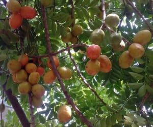 green, fruto, and ciriguela image