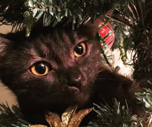 animals, christmas, and cat image