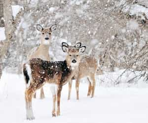 animals, december, and deer image