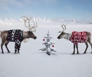 christmas, eve, and christmas tree image