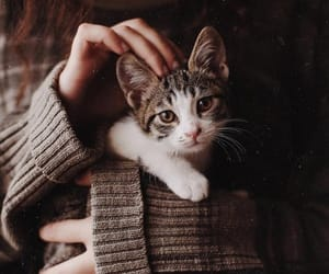 cat, cozy, and cute image