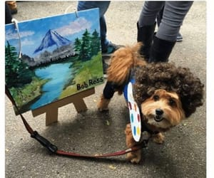 bob ross, costume, and dogs image