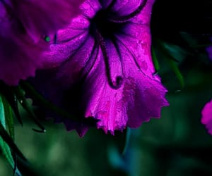 colors, flower, and photography image