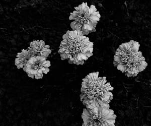 b&w, colors, and flower image