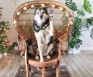 cachorro, caes, and cao image