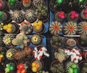 beauty, cactus, and colorful image