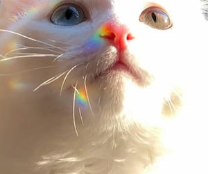 aesthetic, cat, and eyes image