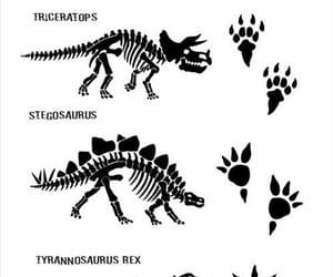 dinosaurs, stegosaurus, and skeleton image