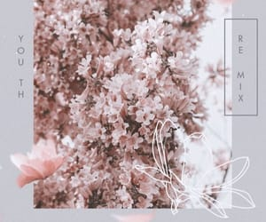 flowers, shawn mendes, and wallpaper image