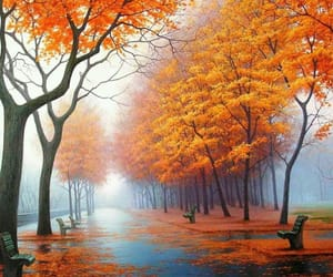 autumn, trees, and fog image