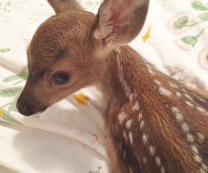 animal, cute, and bambi image