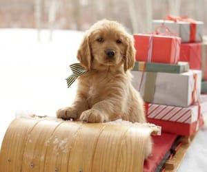 christmas, gifts, and sledge image