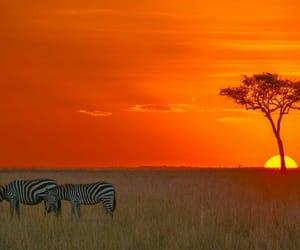 animals, sunrise, and sunset image
