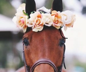flowers, horse, and cute image