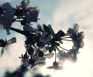 cherry and flowers image