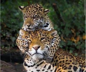 animals, nature, and wild image