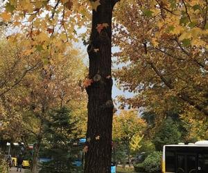 autumn, tree, and leaf image