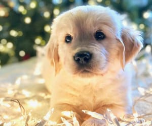 animal, puppy, and christmas image