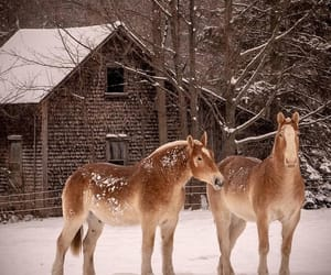 animals, barn, and country living image